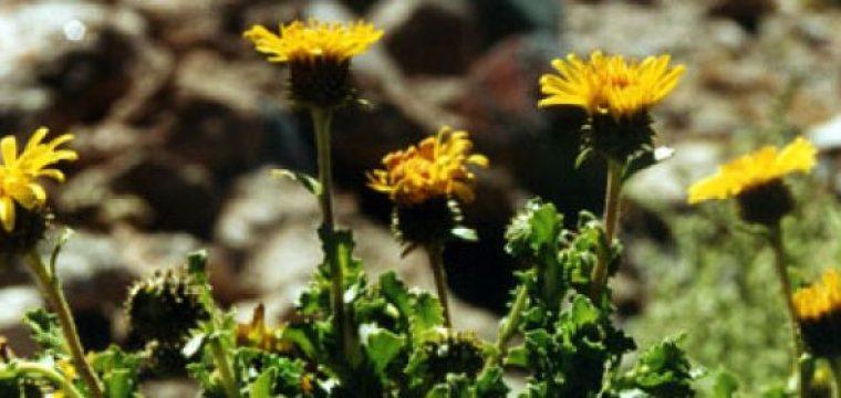 Comprueban las propiedades y beneficios terapéuticos de las hierbas medicinales